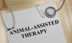 Animal Assisted Therapy (AAT) image
