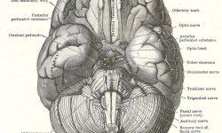 Dissecting Panic image
