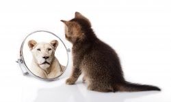 Mirror checking and the Traps for Body Dysmorphic Disorder image