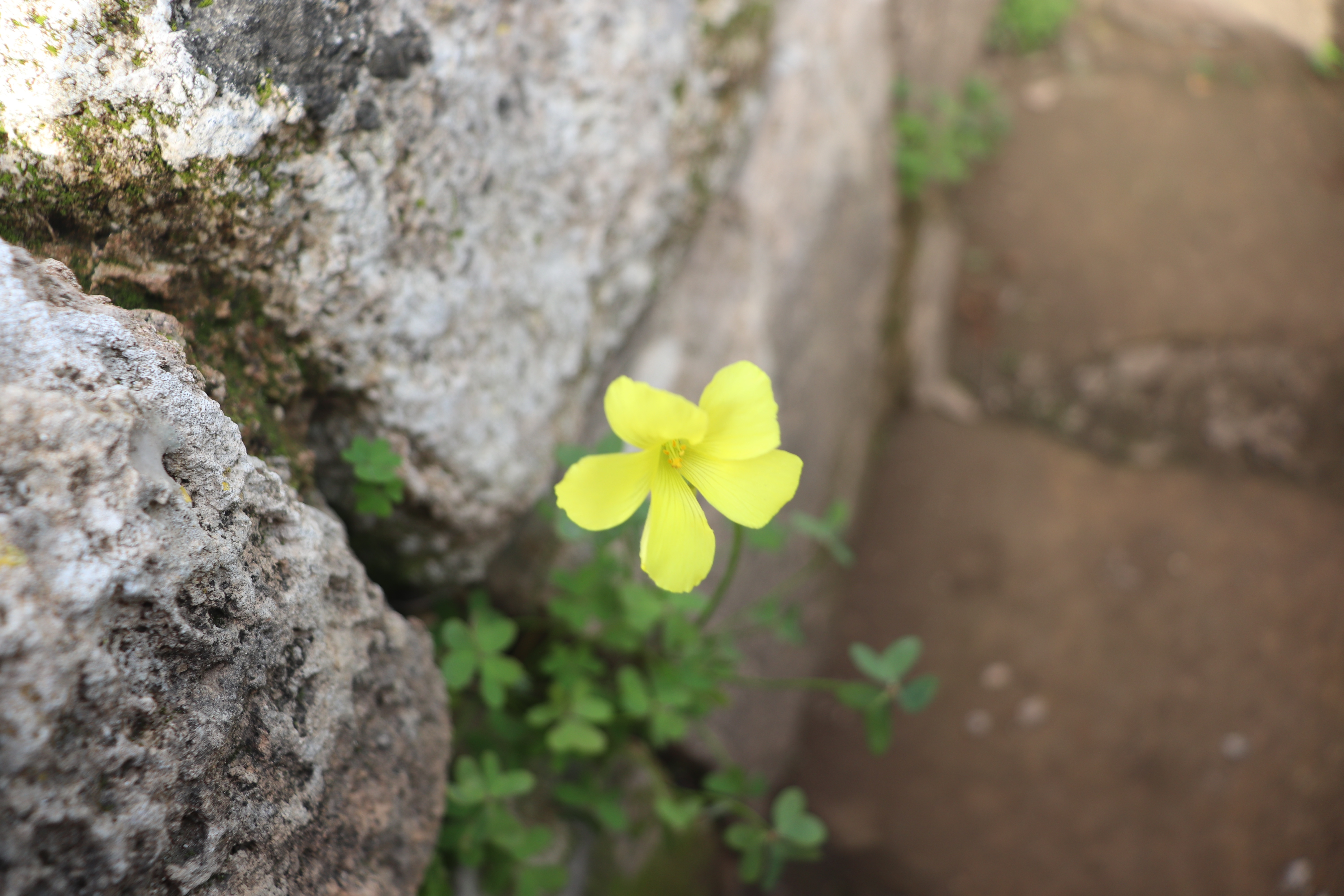 Finding Resilience During COVID-19 image